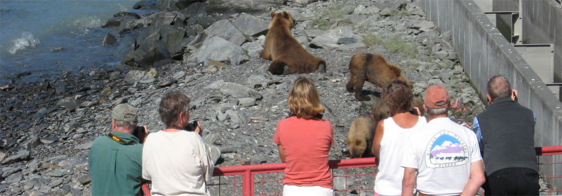 brown bears in valdez